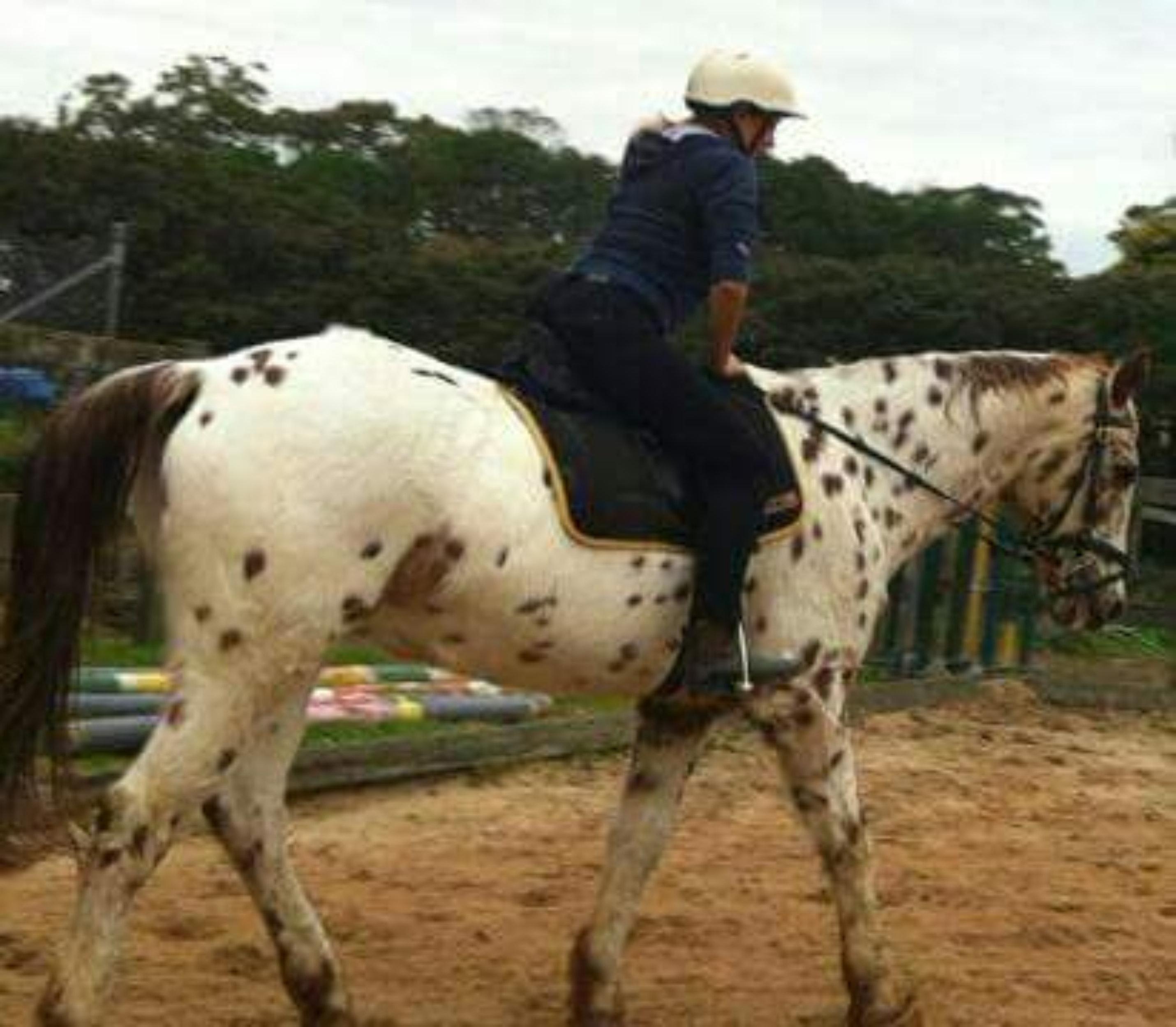 free stock photo of myriam borg horse riding