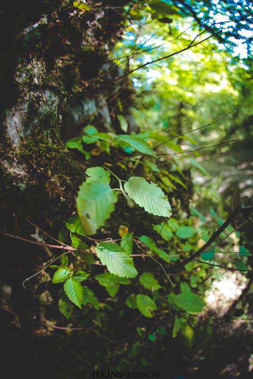 Δωρεάν στοκ φωτογραφιών με δασικός, δέντρο