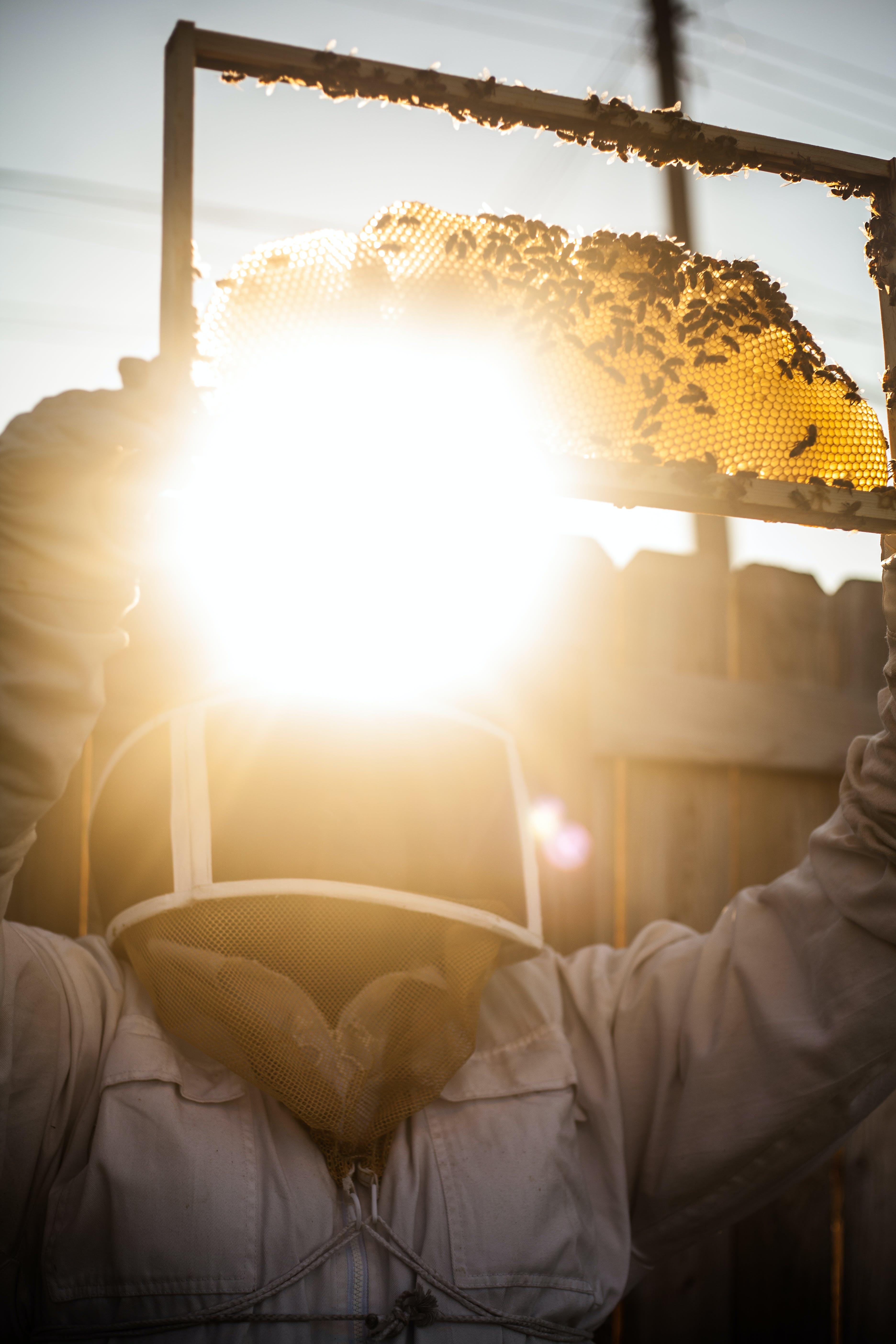 Free stock photo of beekeeping, BlackBeekeepers, CityofDetriot, detroit