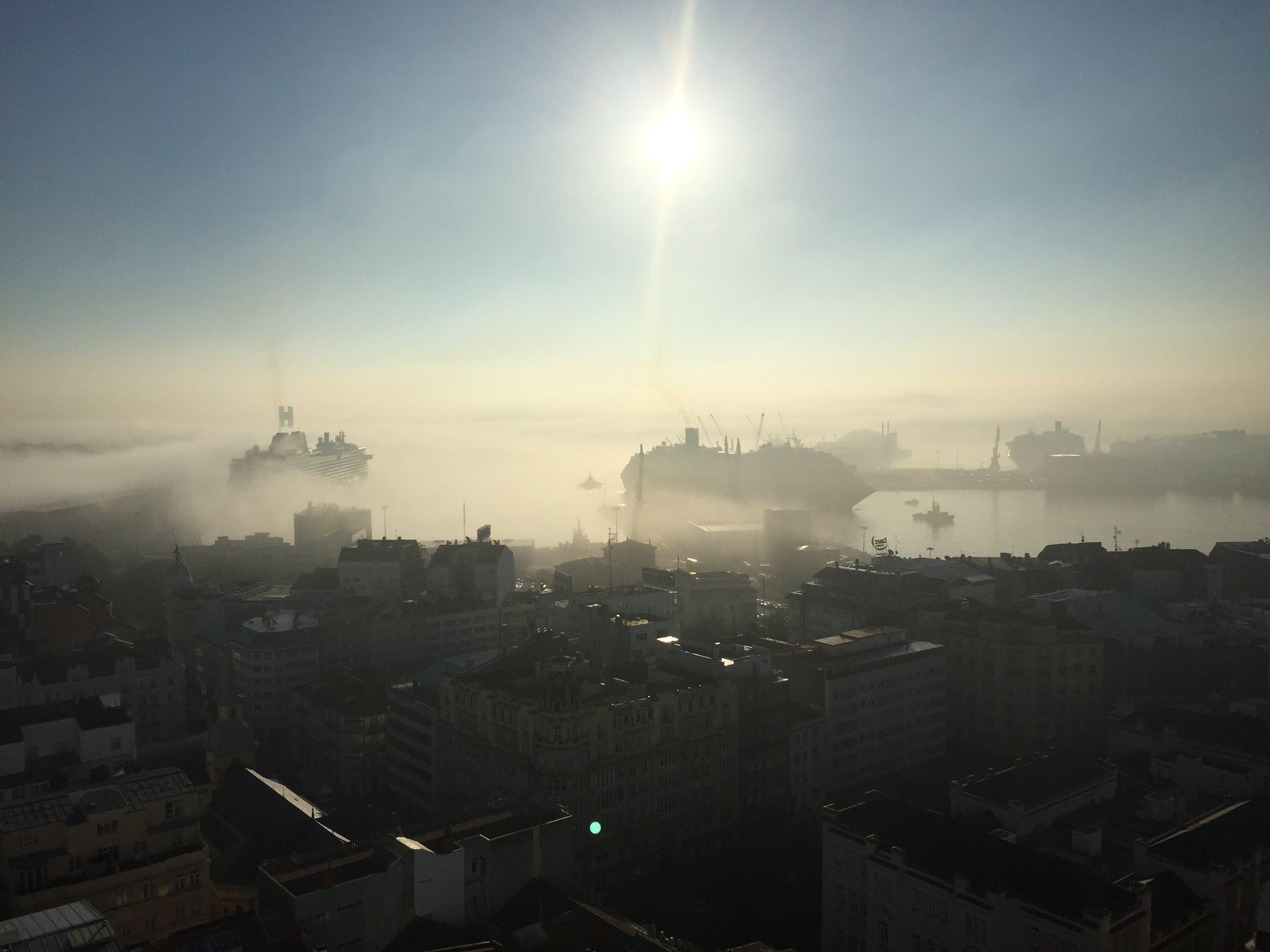 Free stock photo of city, cruise ship, frog