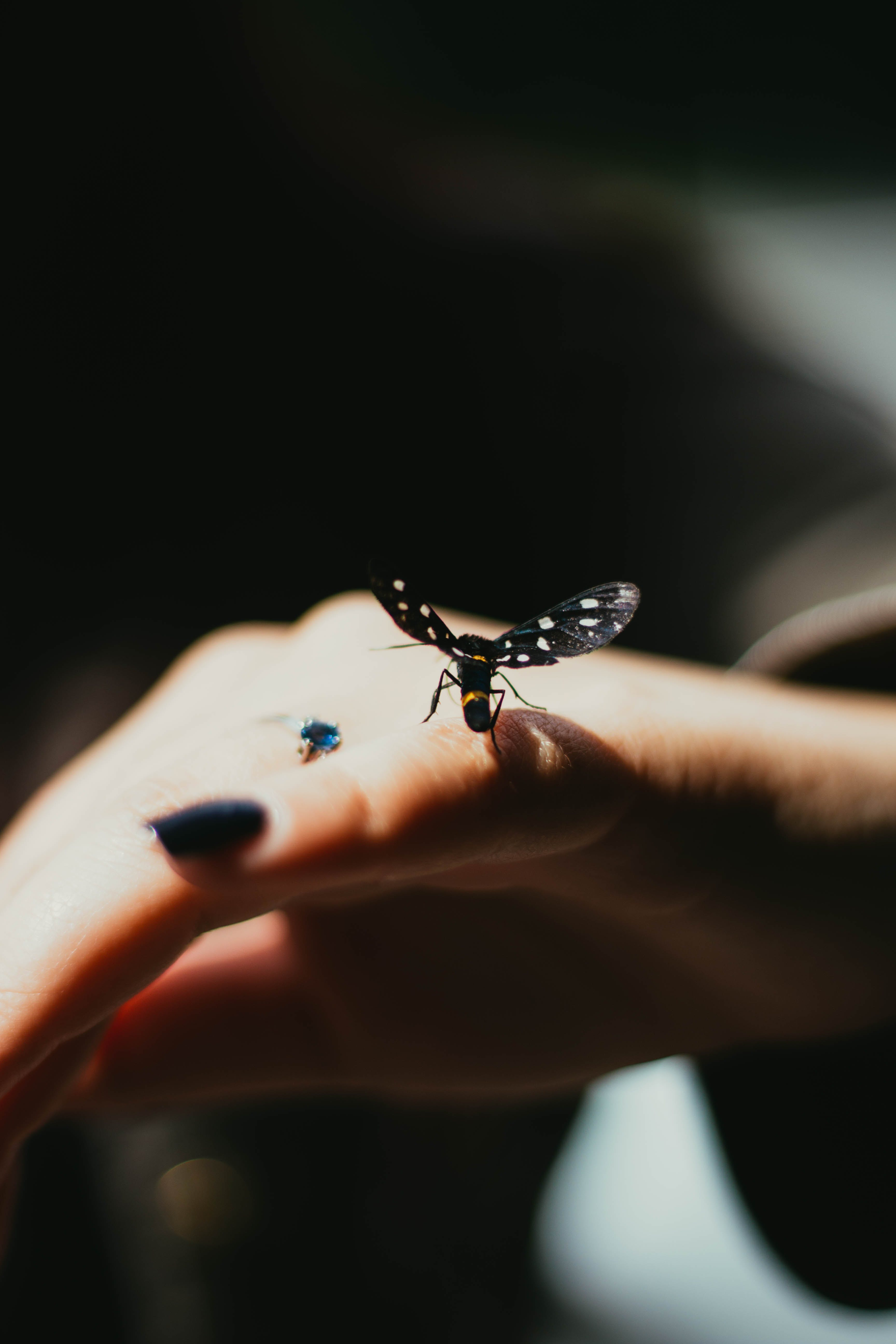 Selective Focus Photography of Black Winged Insect Perched on Person's Pinky Finger
