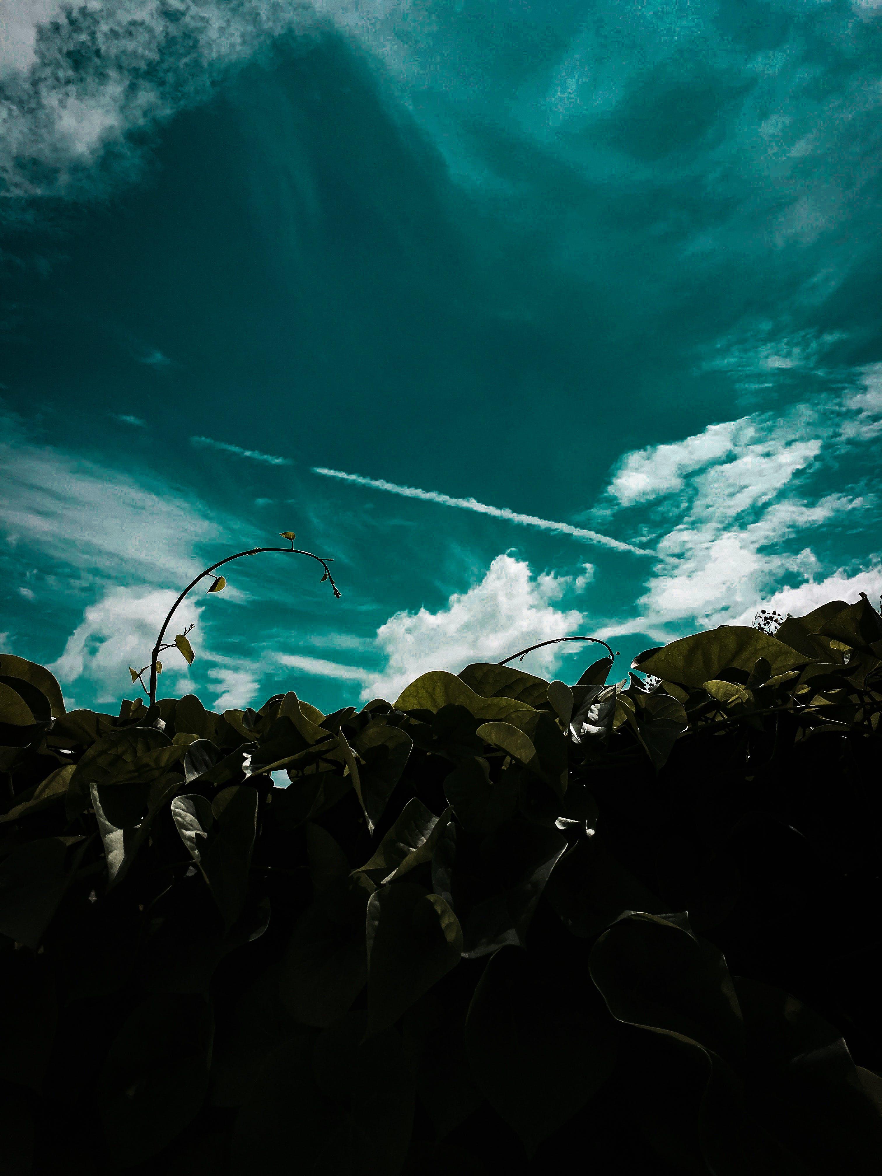 Free stock photo of #beautiful, #blues, #nature, #plants