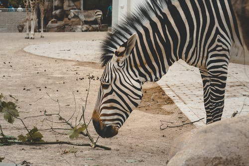 Immagine gratuita di animale, parco con animali, zoo