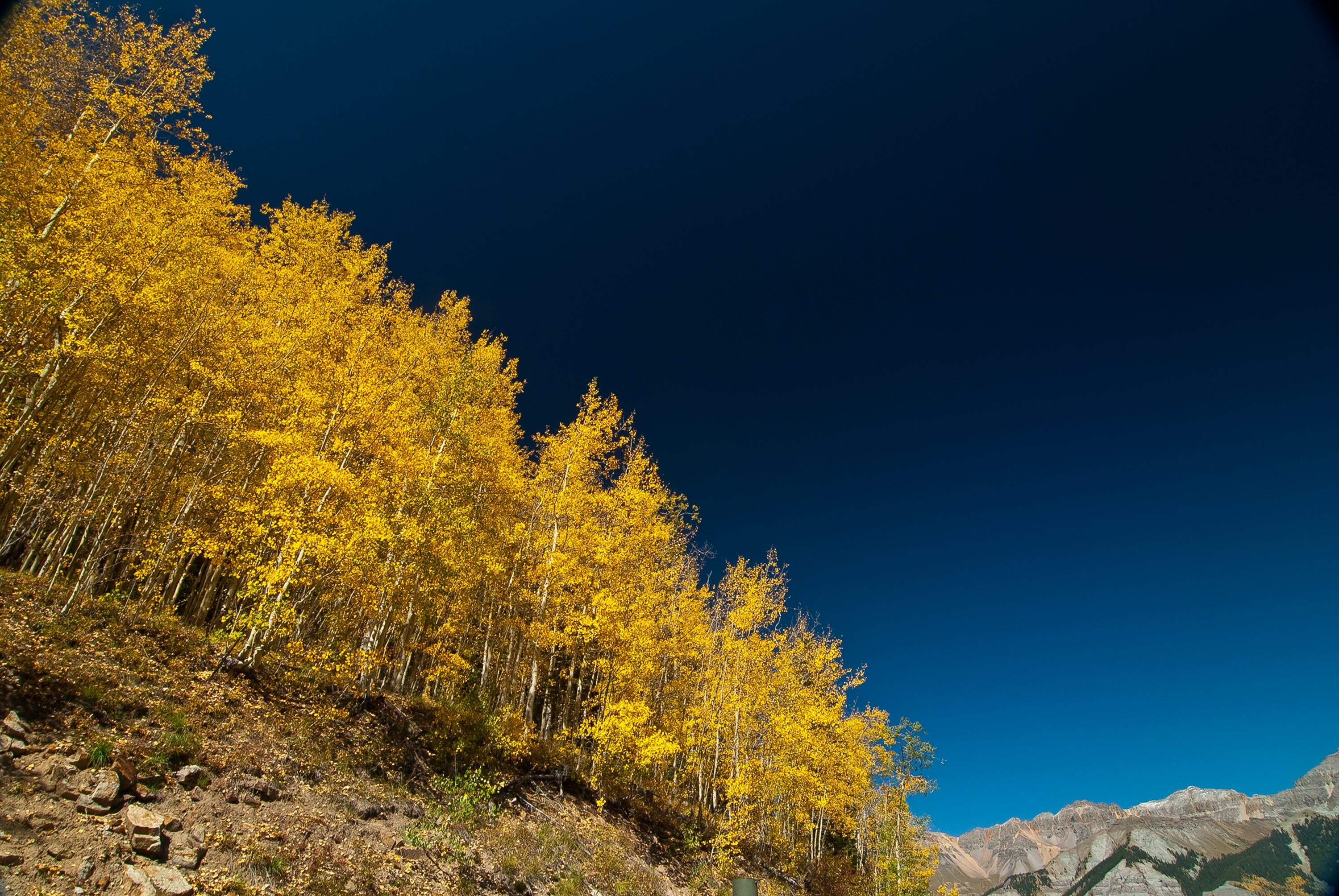 Yellow Leaf Tree on Brown Mountain Slope