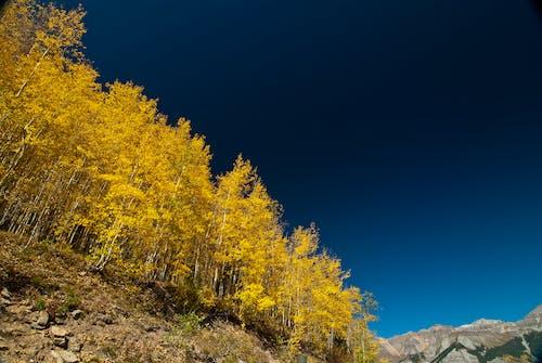 Darmowe zdjęcie z galerii z drzewa, góra, krajobraz, las
