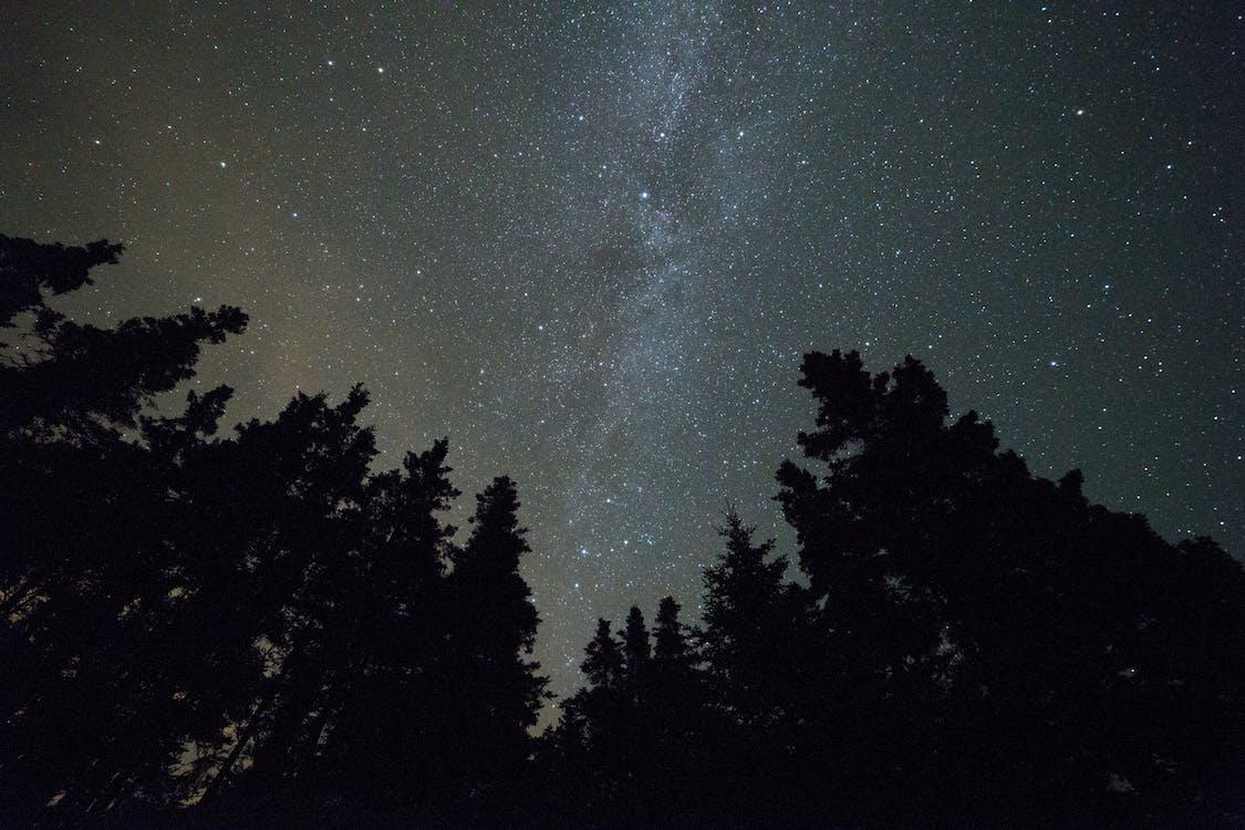 bầu trời, cây, chòm sao