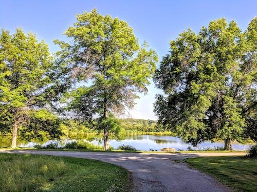 Fotobanka sbezplatnými fotkami na tému chodník, odbočka, stromy