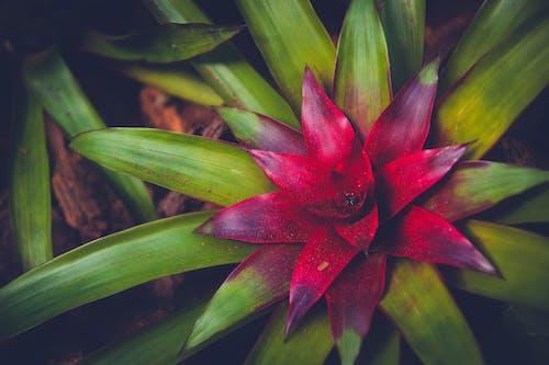 Gratis lagerfoto af blomst, falmede, regnskov, rød