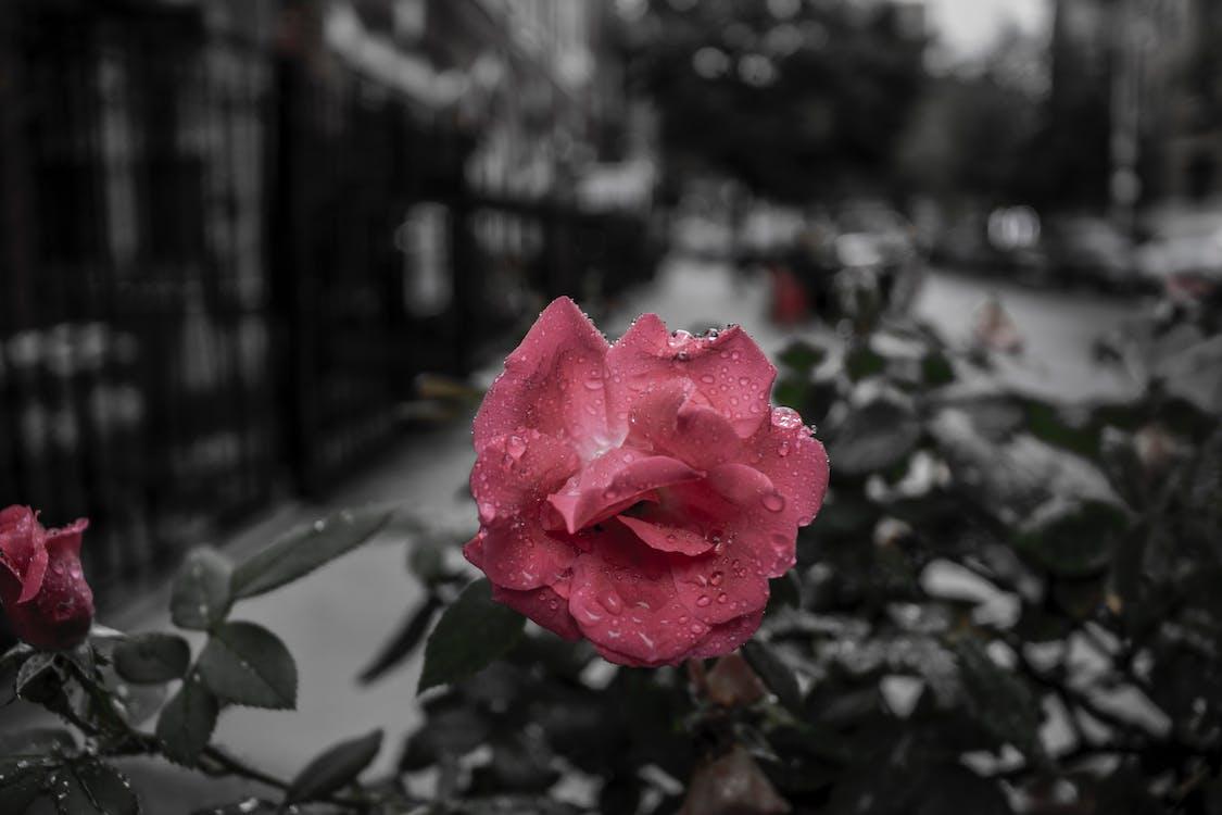 kunstige blomster, lukke op, rød