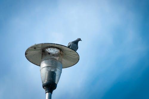 Ảnh lưu trữ miễn phí về bầu trời, chim bồ câu, đèn lồng, màu xanh da trời