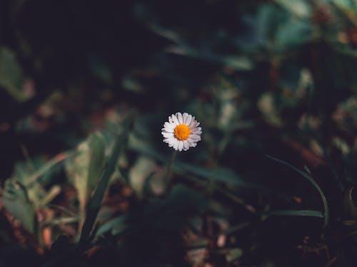 Kostenloses Stock Foto zu blume, blüte, flora, garten