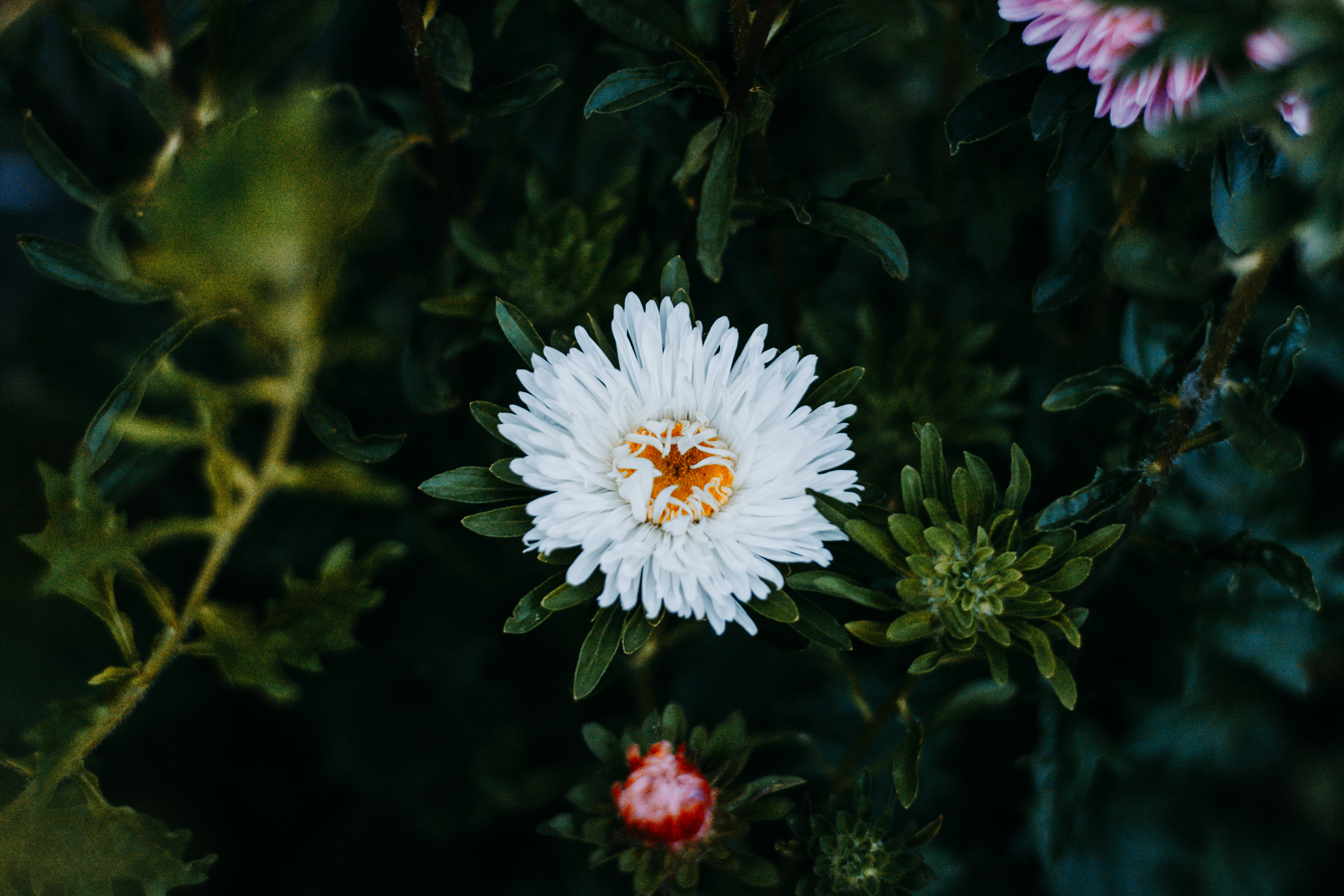 White and Pink Petaled Flowers