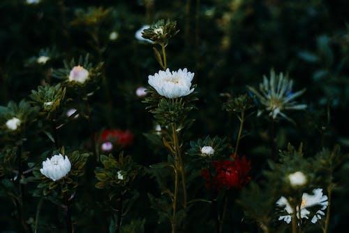 Photos gratuites de arrière-plan flou, centrales, couleurs, fleurs