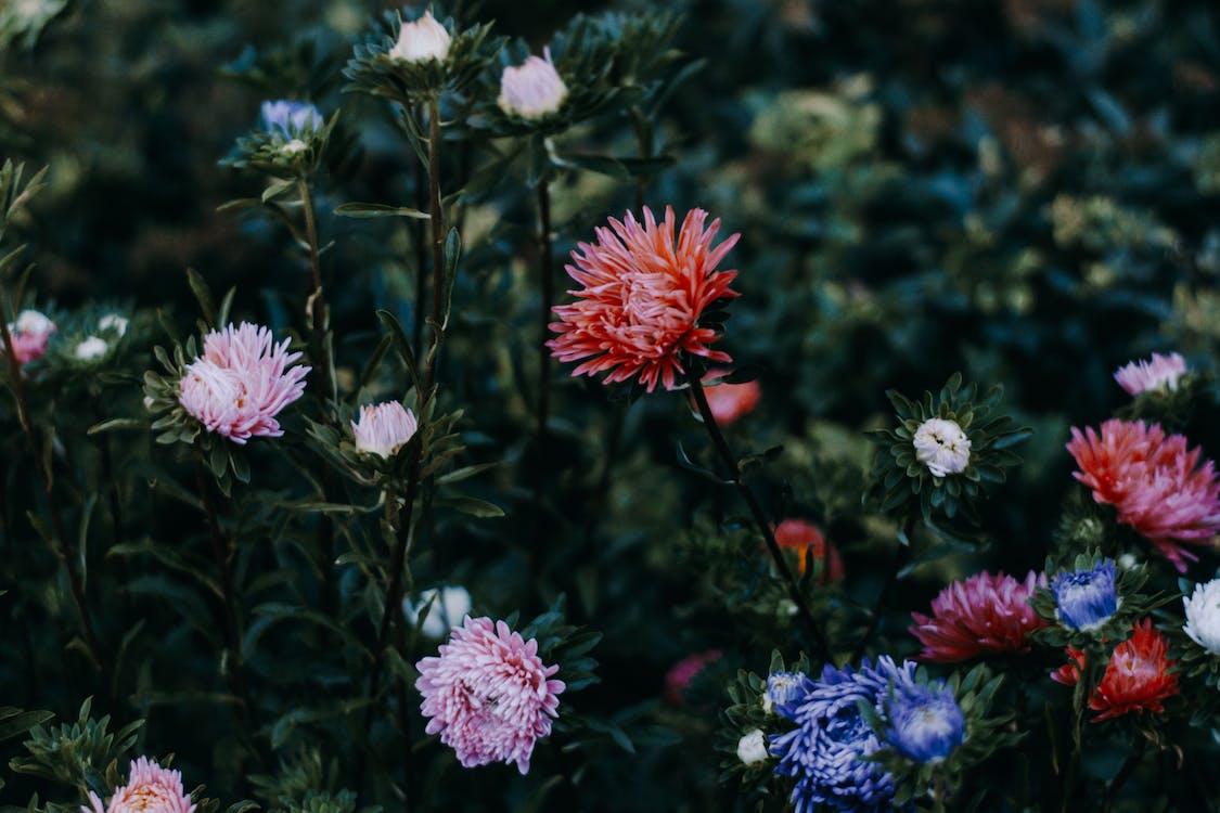 bloeiend, bloemblaadjes, bloemen
