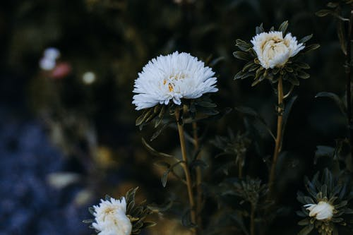 White Petaled Flowers Selective Focus Photography