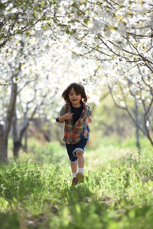 Photos gratuites de arbres, clairière, content, course