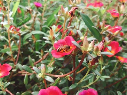 Foto d'estoc gratuïta de abella, flors boniques, fotografia de natura