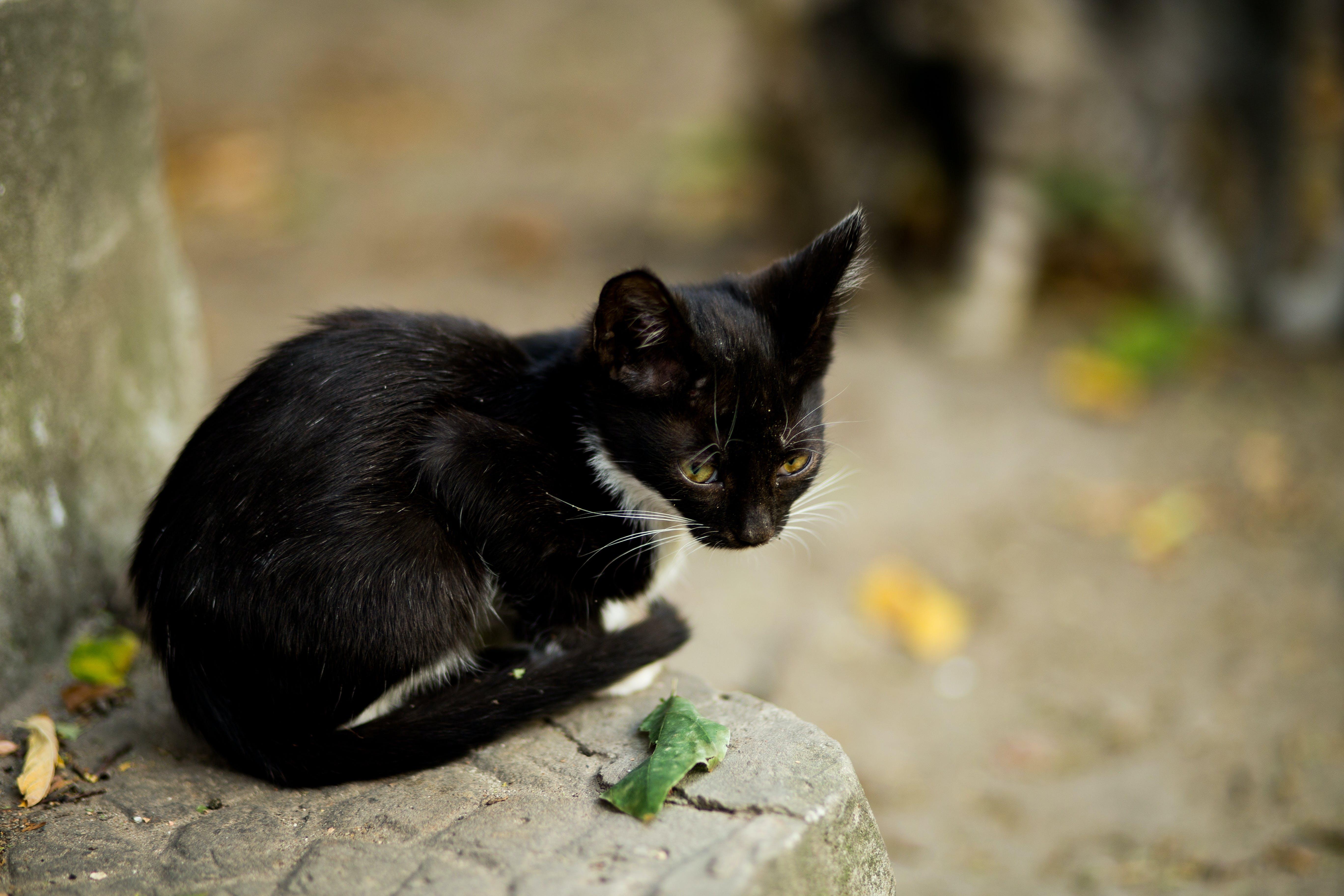 Black Cat Sitting on Gray Concrete Ledge