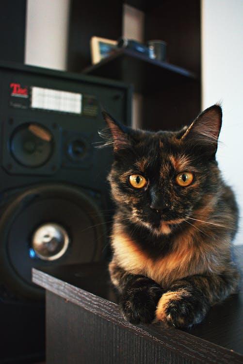 かわいらしい, キティ, スピーカー