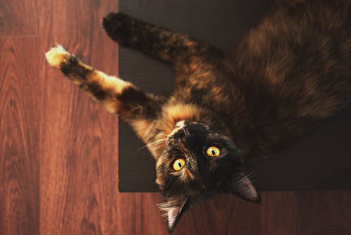 Brown Tabby Cat on Floor