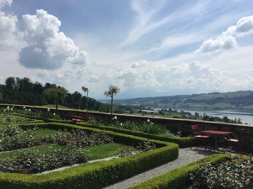 Безкоштовне стокове фото на тему «зелене поле, небо, сад, хмара»