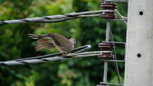 Free stock photo of dove, thailand