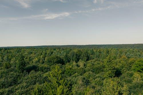 Foto stok gratis alam, awan, bidang, hutan