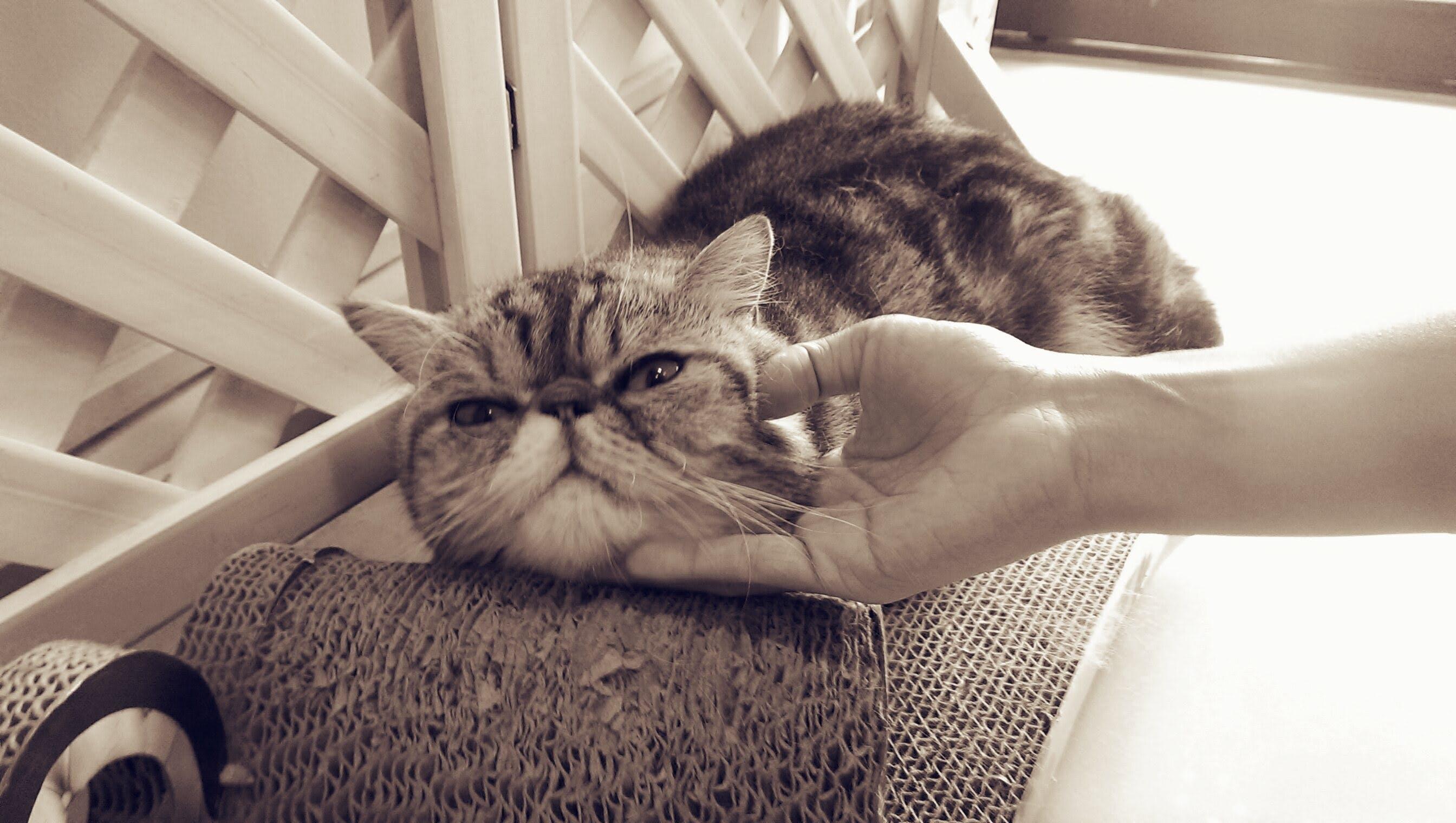 Free stock photo of animal, cat, cute, cute animals