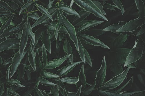 4k 桌面, 增長, 壁紙, 植物群 的 免费素材照片