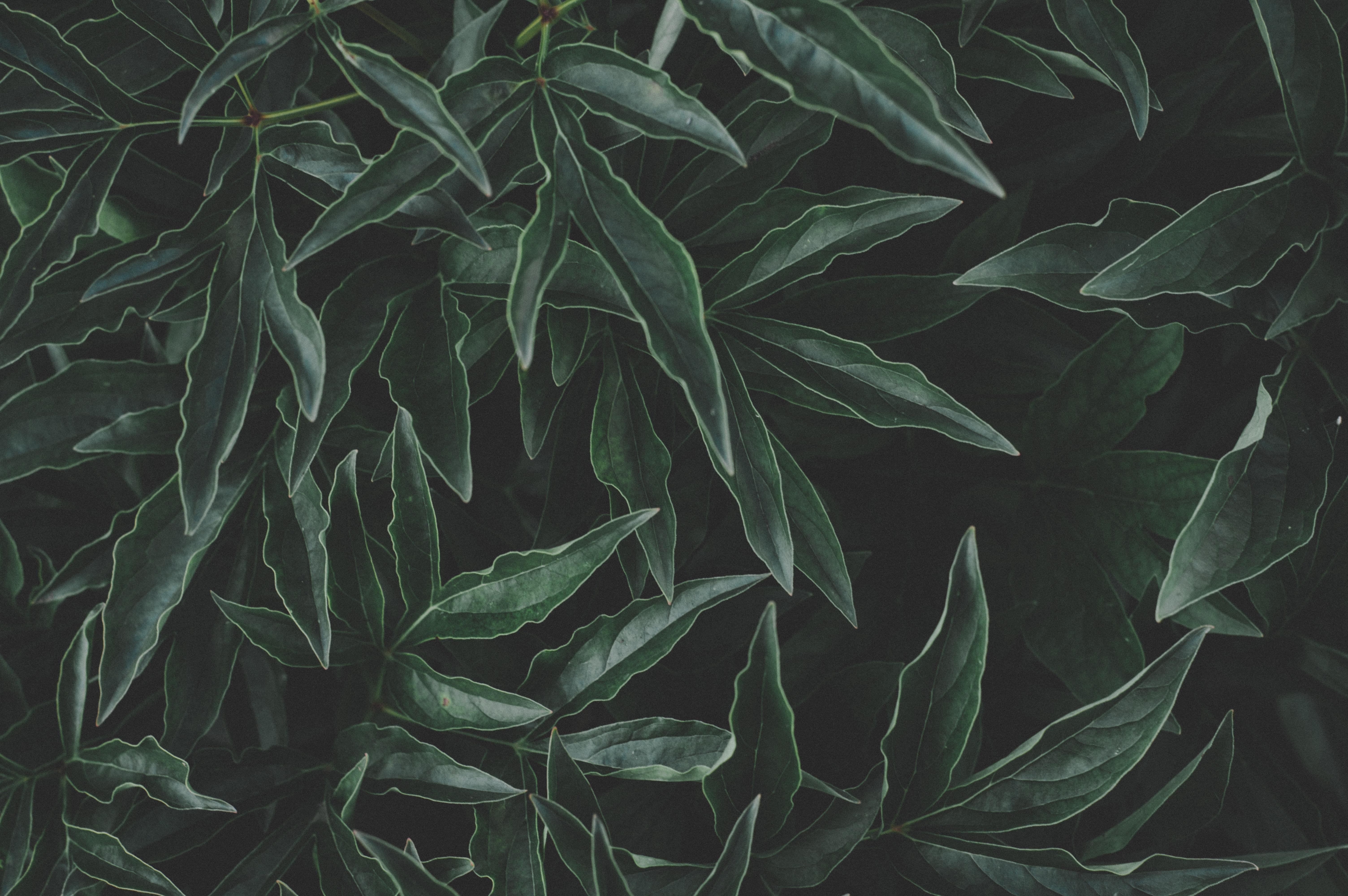 1000+ Beautiful Dark Green Photos · Pexels · Free Stock Photos