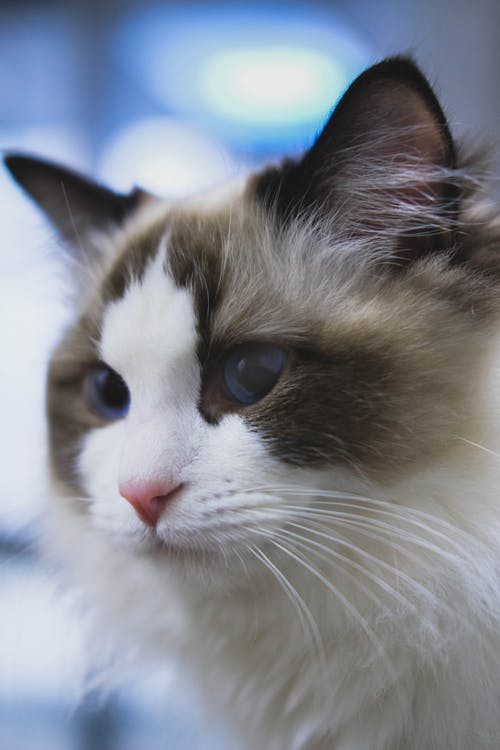 Selective Focus Photo of White and Gray Cat