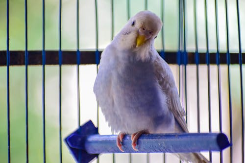 White Bird Perched on Cage
