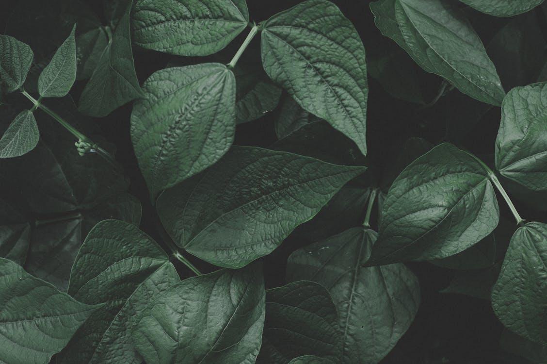 alami, botani, daun-daun hijau