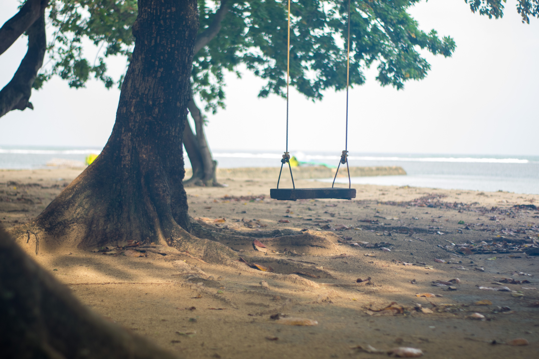 Základová fotografie zdarma na téma houpačka a strom, houpat, na pláži, pláž