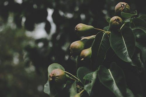 Безкоштовне стокове фото на тему «великий план, вирощувати, дерево, зелене листя»