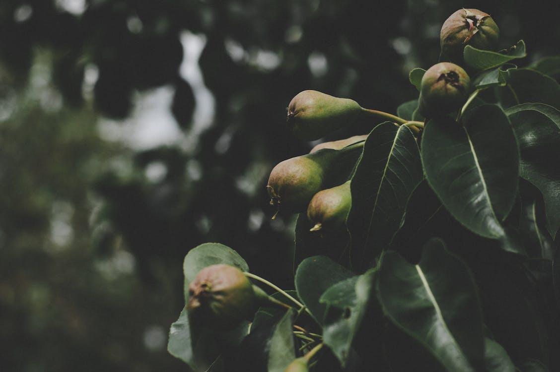 arbre, colors, creixement