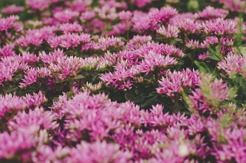 Fotobanka sbezplatnými fotkami na tému flóra, hĺbka ostrosti, hracie pole, kvet ovocného stromu