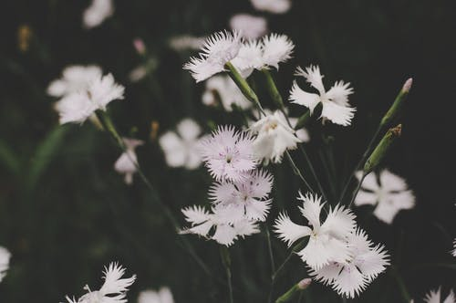 Low Light Photo White Petaled Flowers