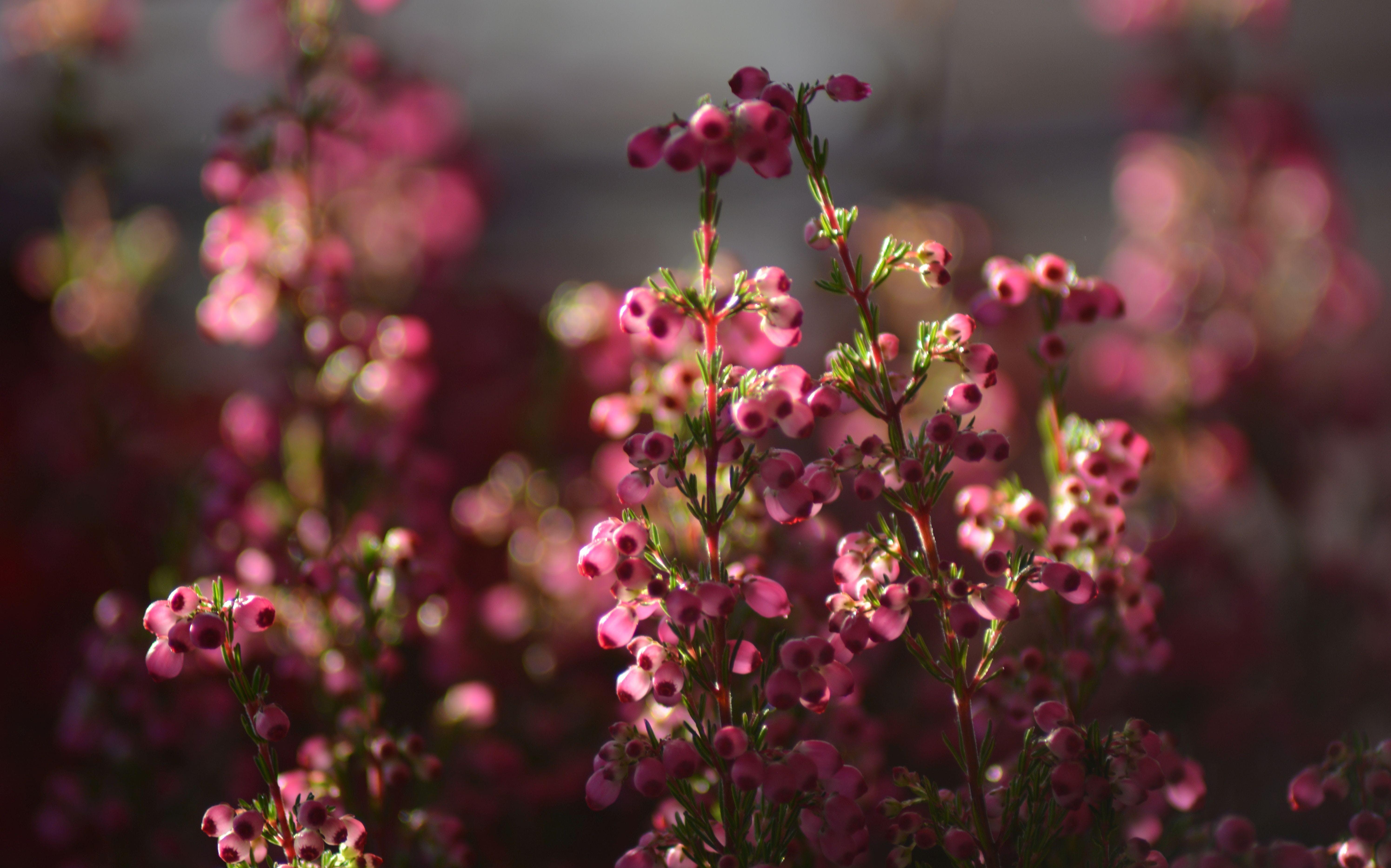 Gratis lagerfoto af blomst, blomstermotiv, blød, farve