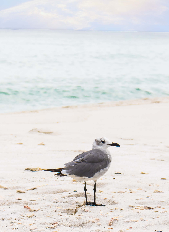 Free stock photo of bird, sand, water, ocean