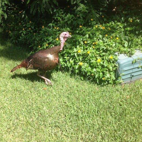 Free stock photo of nature, turkey