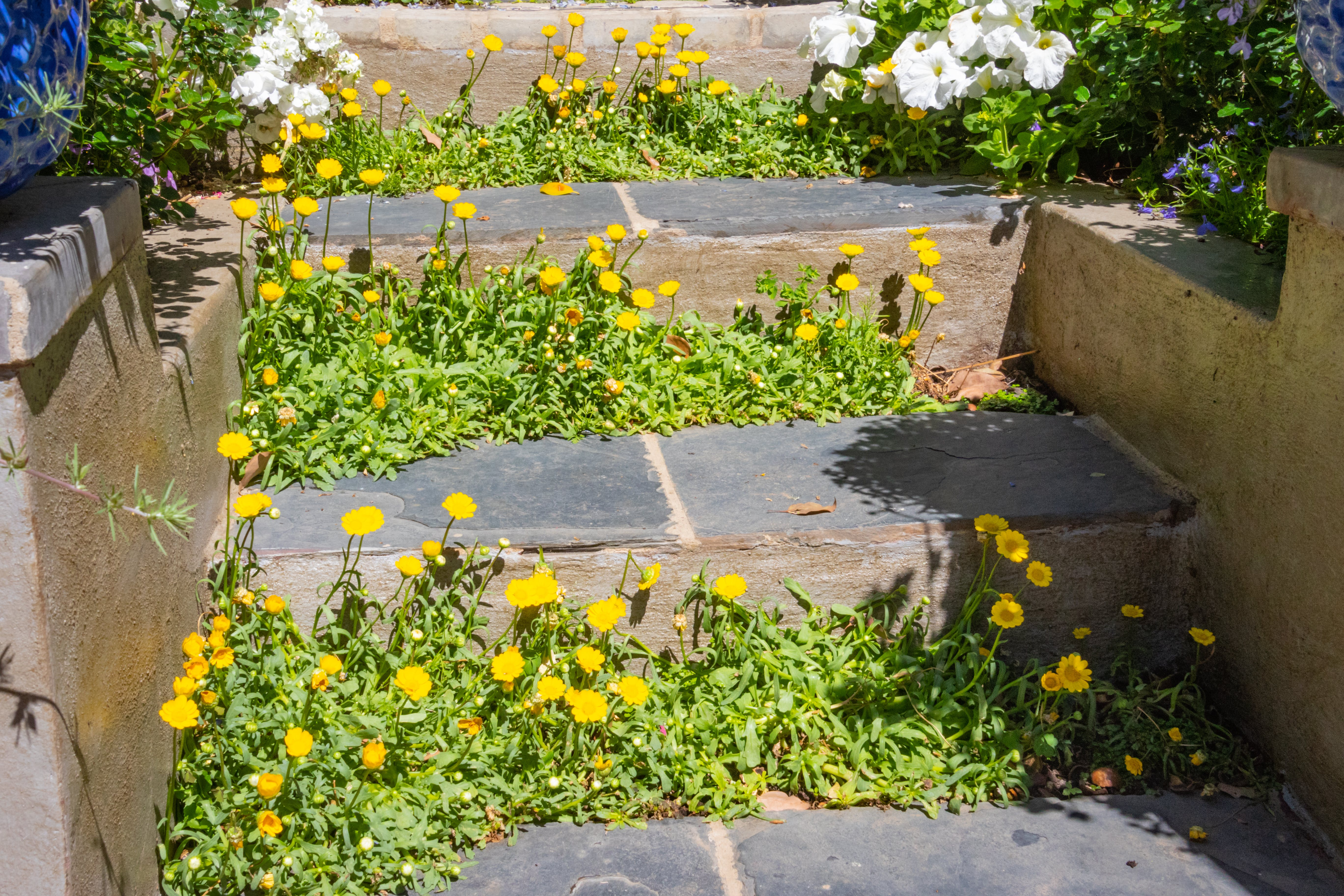 Free stock photo of stairs, nature, flowers, summer