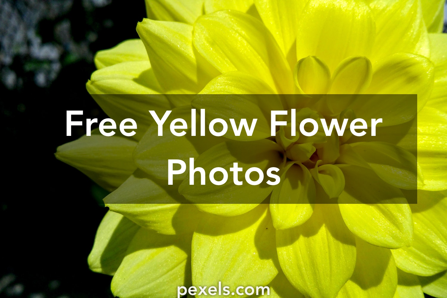 1000 Beautiful Yellow Flower Photos Pexels Free Stock Photos