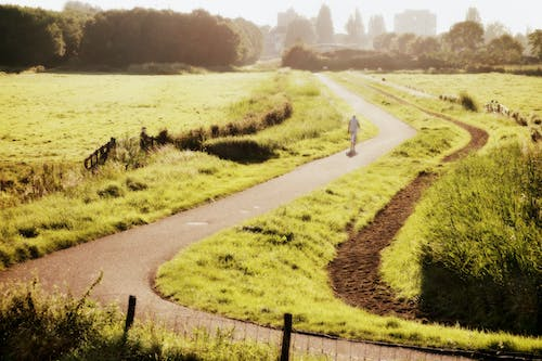 Free stock photo of dutch, Holland, landscape, meadow