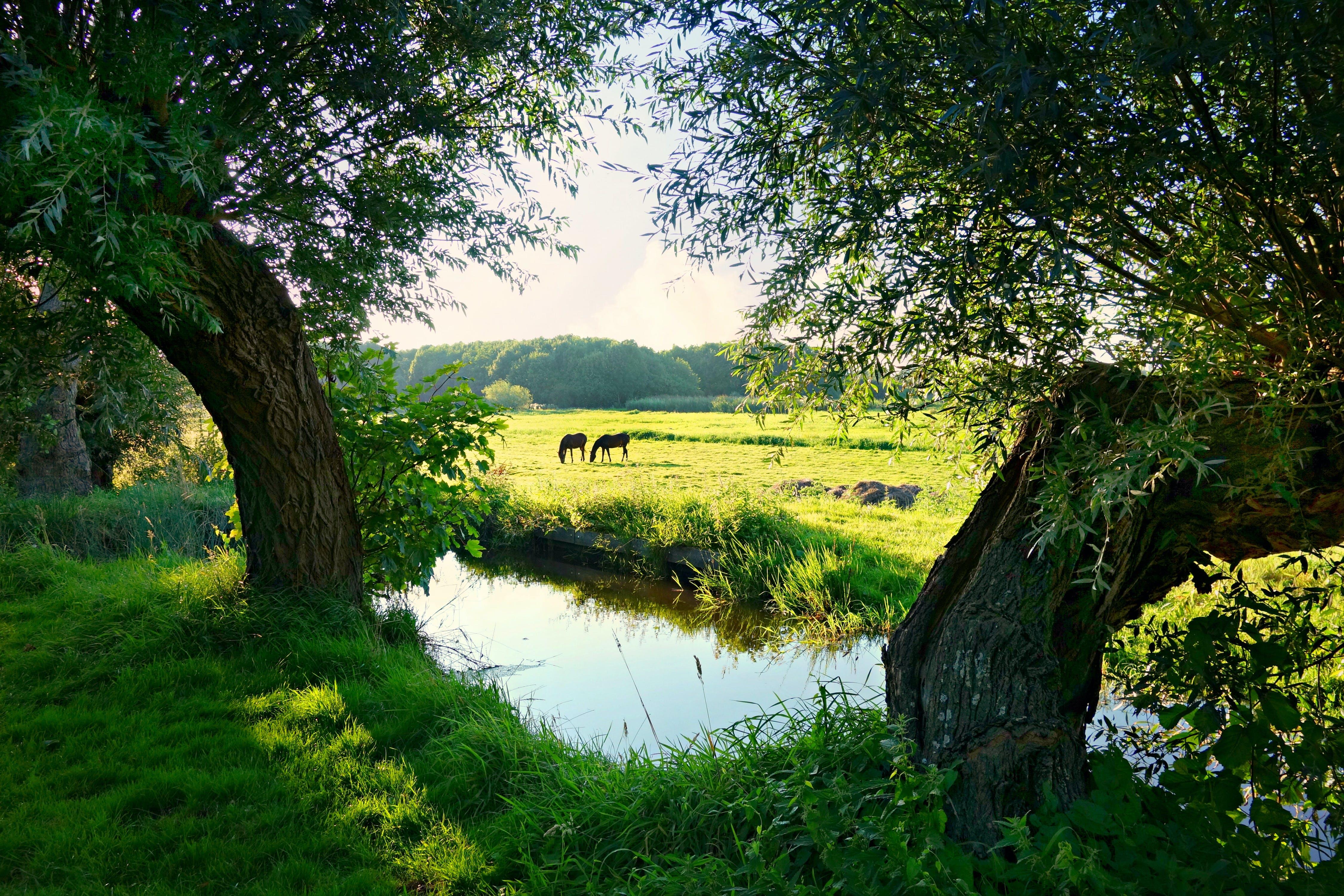 Grazing Animals Near Creek and Trees