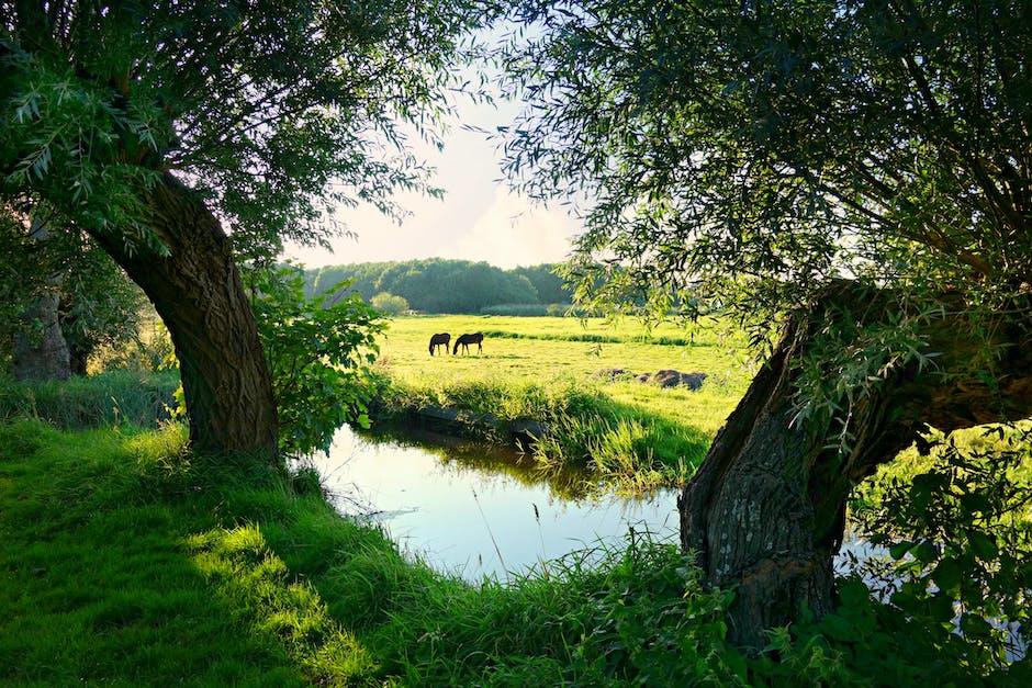 Landscape water meadow green