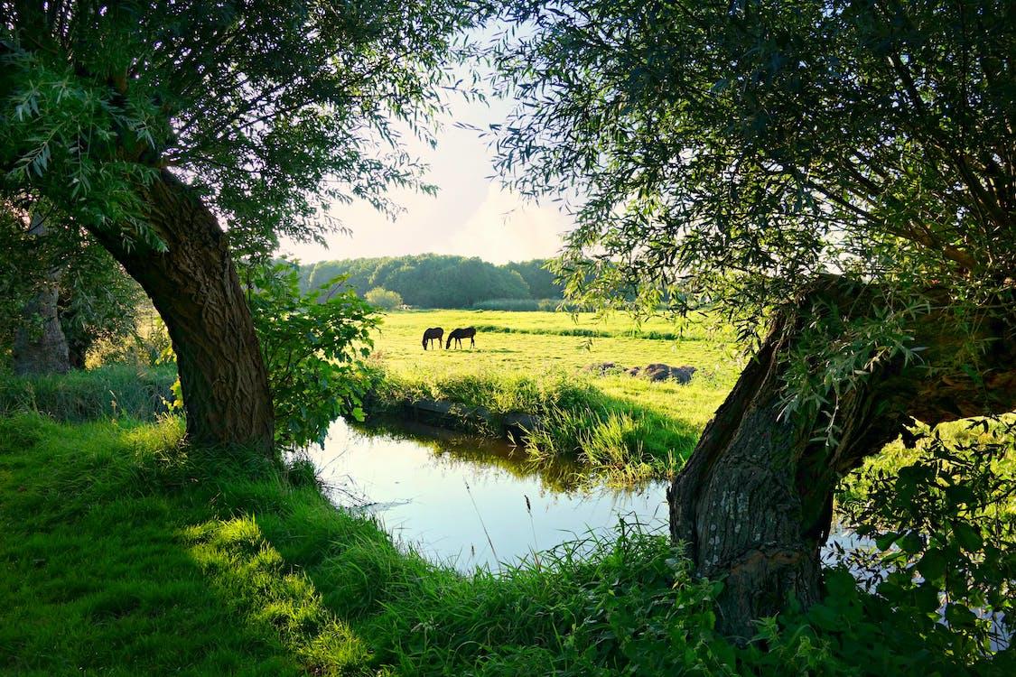 Gratis stockfoto met akkerland, bouwland, groen