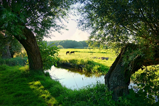 Free stock photo of landscape, water, meadow, green