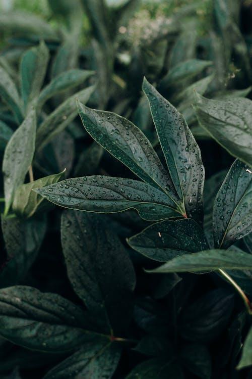 Ilmainen kuvapankkikuva tunnisteilla kastehelmet, kasvikunta, kasvit, luontoäiti