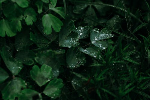 Green Leaves With Water Drops Photo